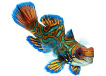 Aquariums link